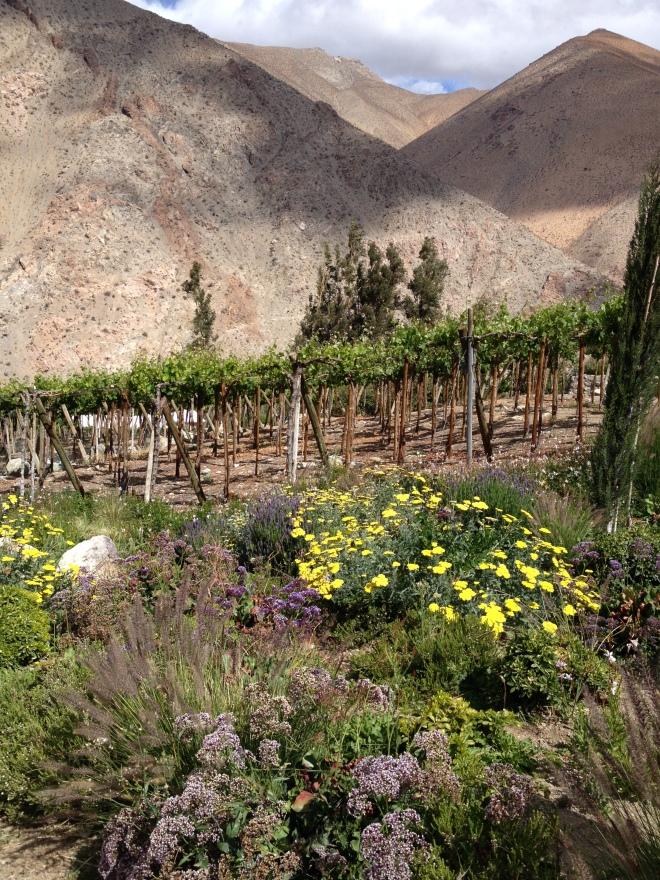 Valle del Elqui, Destileria Mistral